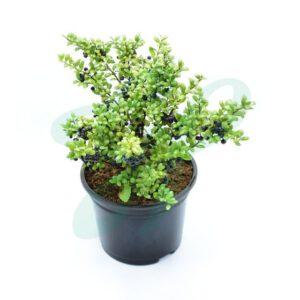 mooie plant